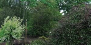 volwassen-boom-planten-8